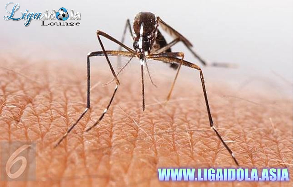 Nyamuk Tak Sembarang Pilih Korban, Apa Penyebabnya?